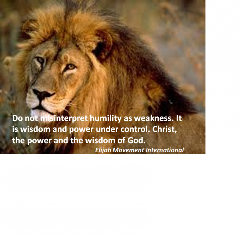 Humility -Lion
